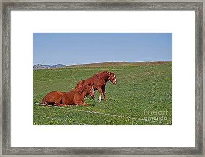 Framed Print featuring the photograph Lazy Horses by Valerie Garner