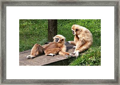Lazy Life Framed Print