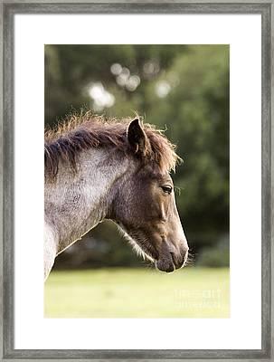 Lazy Pony Framed Print by Angel  Tarantella