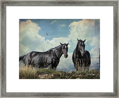 Lazy Summer Day Framed Print