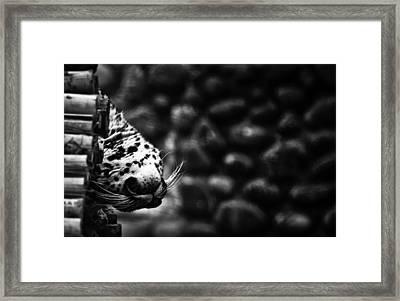 Lazy Whiskers Framed Print by Mudit Mathur