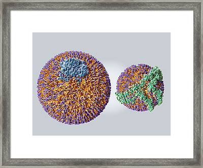 Ldl And Hdl Particles Framed Print by Juan Gaertner