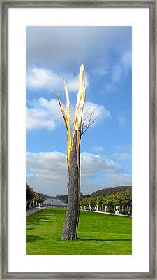 Le Arbre Framed Print by William Lanza