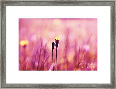 Le Centre De L Attention - Pink S0301 Framed Print by Variance Collections