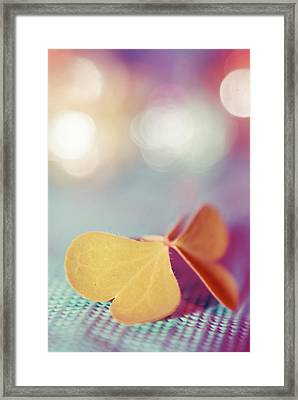 Le Papillon 03 - The Butterfly 03  Framed Print