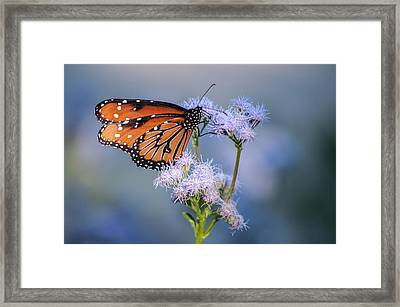 $100 - 8x10 Metal - Queen Butterfly Framed Print
