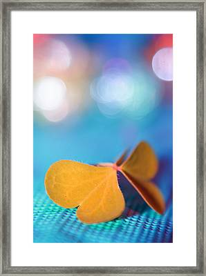 Le Papillon - The Butterfly - 21 Framed Print by Variance Collections