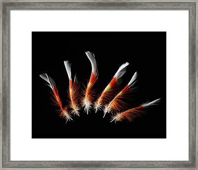 Leadbetter Cockatoo Framed Print
