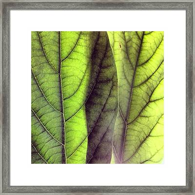 Leaf Abstract Framed Print by Christy Beckwith