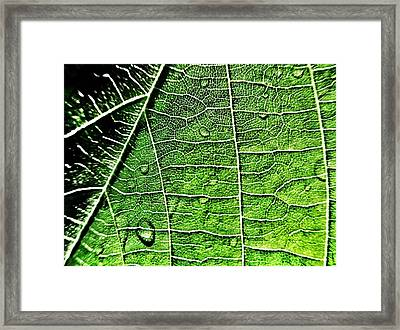 Leaf Abstract - Macro Photography Framed Print by Marianna Mills