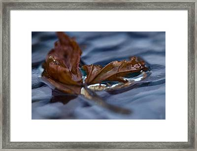 Leaf Afloat Framed Print by Nancy Edwards