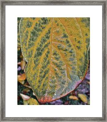 Leaf After Rain Framed Print by Bill Owen