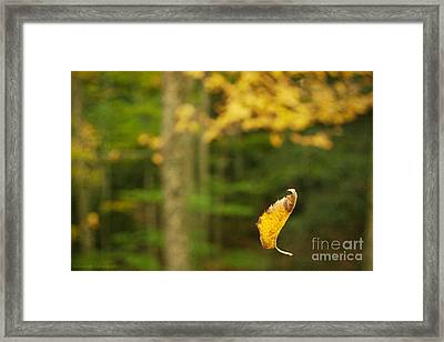 Leaf Aloft Framed Print