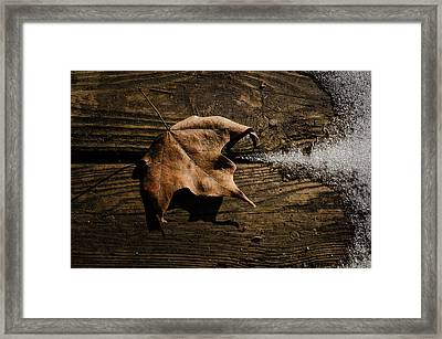 Leaf And Ice Framed Print by Diana Boyd