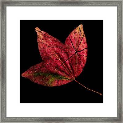 Leaf And Tree Framed Print by Jon Woodhams