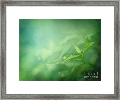 Leaf Background Framed Print by Mythja  Photography
