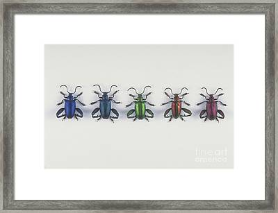 Leaf Beetles Framed Print by Barbara Strnadova
