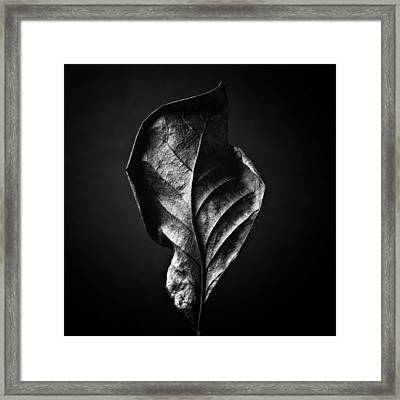 Black And White Nature Still Life Art Work Photography Framed Print