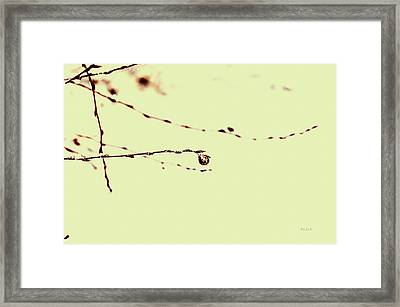 Leaf Framed Print by Bob Orsillo