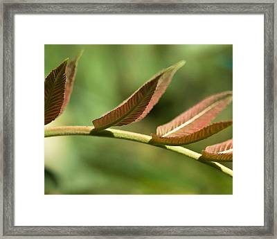 Leaf Bridge Framed Print