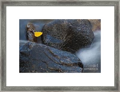 Leaf Bridge One Framed Print by Vinnie Oakes