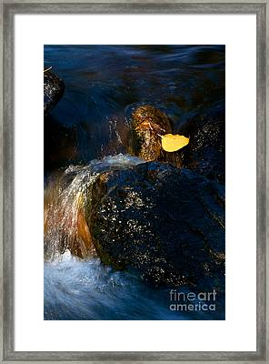 Leaf Bridge Two Framed Print by Vinnie Oakes