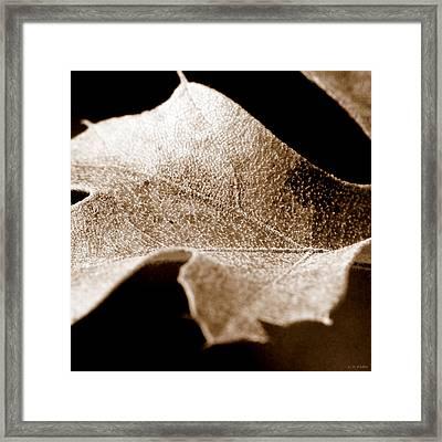 Leaf Collage 1 Framed Print