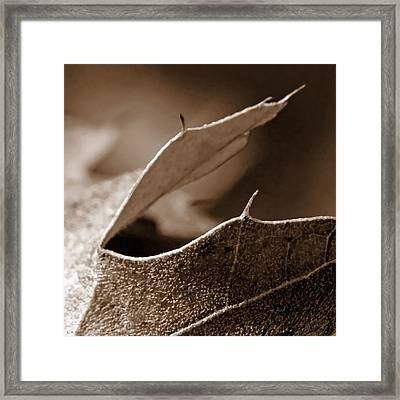 Framed Print featuring the photograph Leaf Collage 2 by Lauren Radke