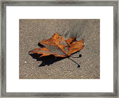 Framed Print featuring the photograph Leaf Composed by Joe Schofield