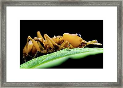 Leaf Cutter Ant Framed Print