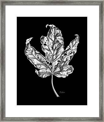 Leaf Framed Print by David Fedan