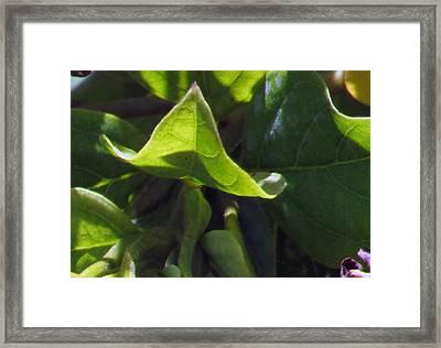 Leaf Framed Print by Debi Singer