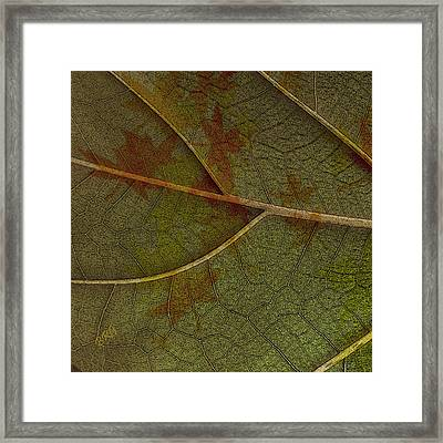 Leaf Design I Framed Print