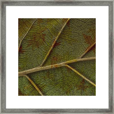 Leaf Design II Framed Print