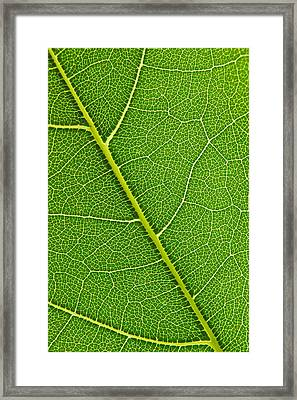 Framed Print featuring the photograph Leaf Detail by Carsten Reisinger