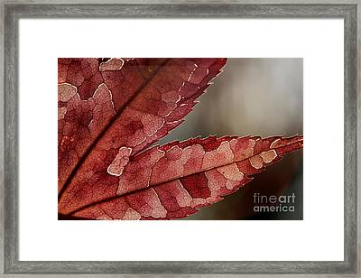 Framed Print featuring the photograph Leaf Detail by Kenny Glotfelty