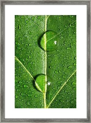 Leaf Dew Drop Number 10 Framed Print by Steve Gadomski