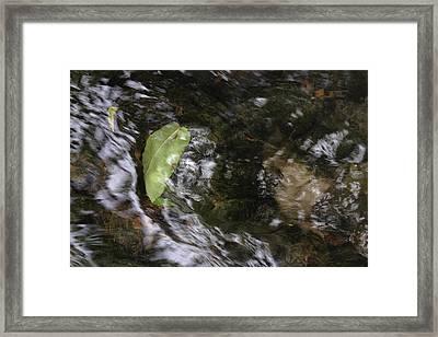 Leaf Drift Framed Print by Daniel Kasztelan