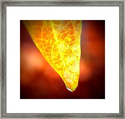 Framed Print featuring the photograph Leaf Drop by Candice Trimble