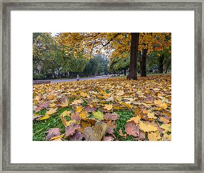 Leaf Fall Framed Print by Sergey Simanovsky