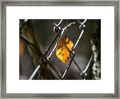 Framed Print featuring the photograph Leaf. by Gary Gillette