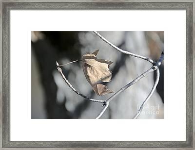 Leaf Harp Framed Print by Ted Guhl