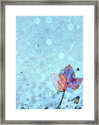 Leaf In Ice Framed Print by Todd Breitling