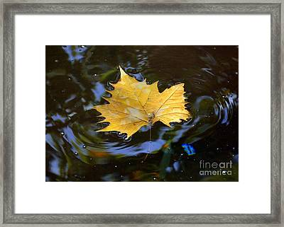 Framed Print featuring the photograph Leaf In Pond by Lisa L Silva
