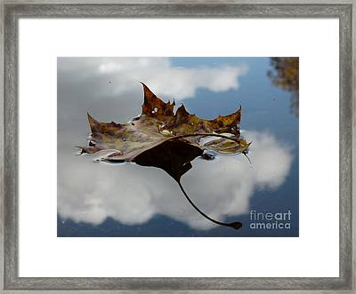 Leaf In Sky Framed Print
