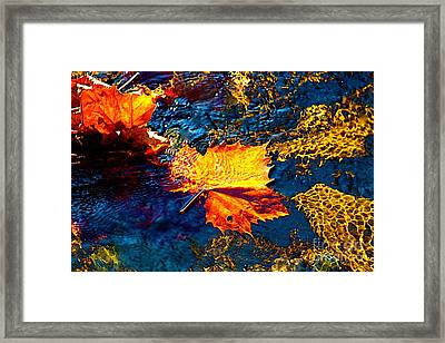 Leaf In The Stream Framed Print by Jay Nodianos