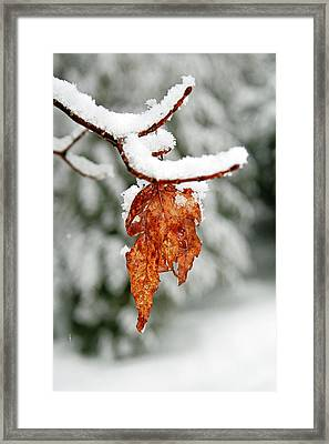 Framed Print featuring the photograph Leaf In Winter by Barbara West
