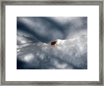 Leaf In Winter Landscape Framed Print by Carolyn Reinhart