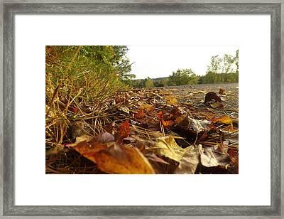 Leaf-ing Framed Print