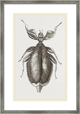 Leaf-insect Framed Print by Litz Collection